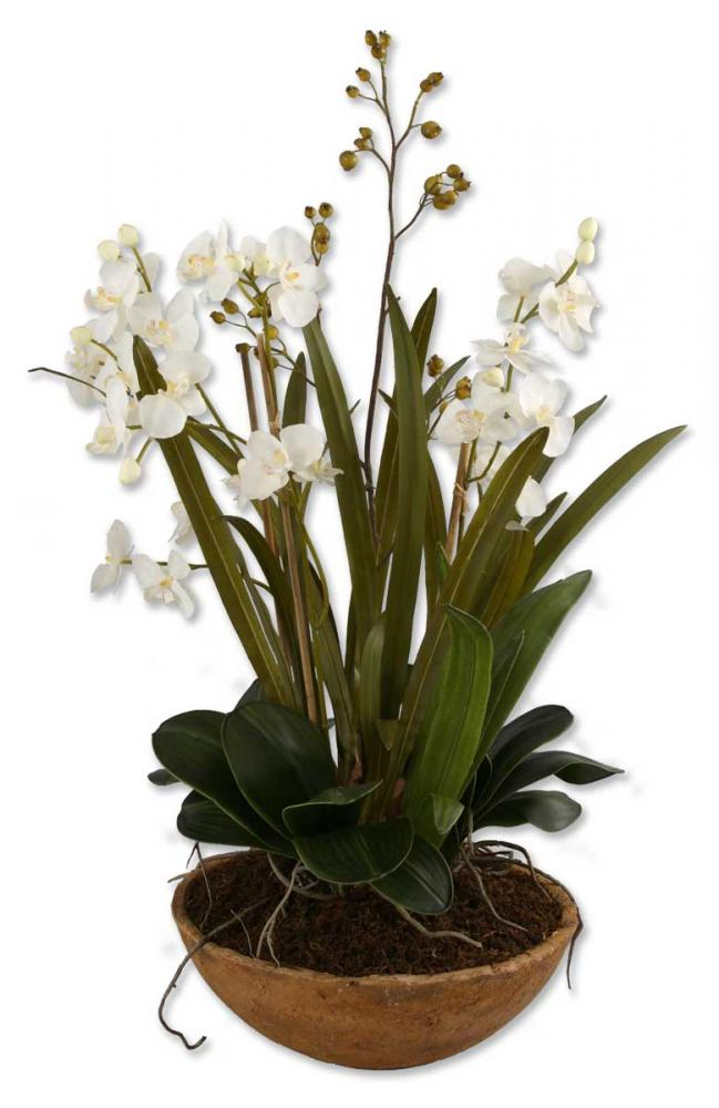 Uttermost Moth Orchid Planter